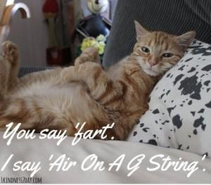 cat gstring
